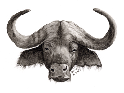 Buffalo Drawing at GetDrawingscom  Free for personal use